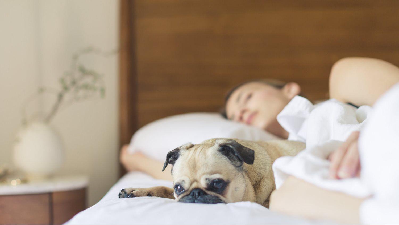 dog sleeping woman