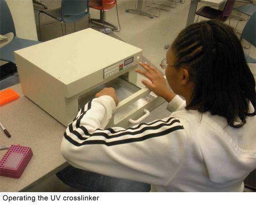 A student uses UVP Crosslinker, UCSD